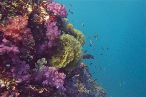 Corals at Black Rock Mergui