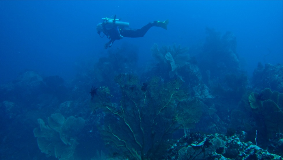 diver-at-fan-forest